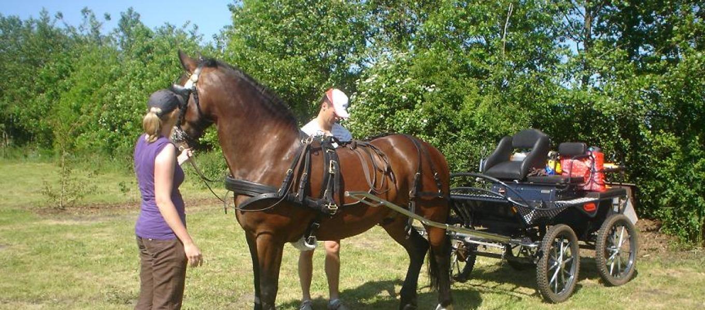 Paarden op The Green Ranch - Venebrugge