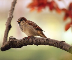 AFGELAST Wandeling 'Vroege Vogels'