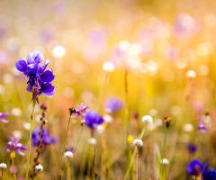 AFGELAST Wandeling 'Wilde planten en orchideeën'