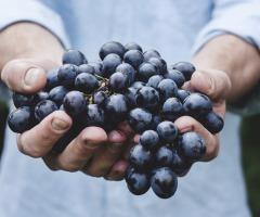 Wijn- en kaasproeverij