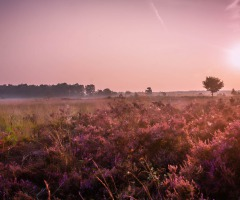 Heide wandeling Springendal