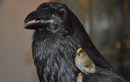 Vroege Vogelwandeling