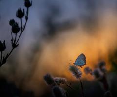 Vlinderen in het Roderveld