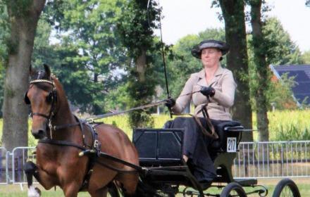Tuigpaarden en hackney concours Hellendoorn