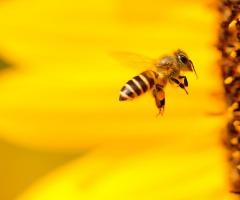 Bijzondere bijen