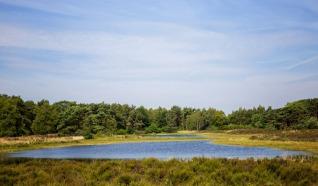 Nature reserve De Bergvennen