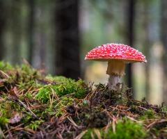 Wandeling Herfst en Paddestoelen