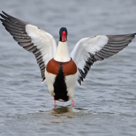Trekvogels in de Vreugderijkerwaard