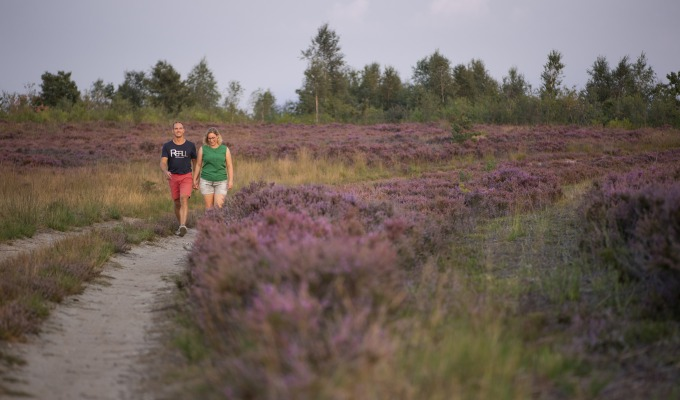 Heathland on the Sallandse Heuvelrug