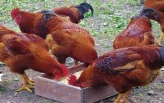 Kleinvee- en tweedehandsgoederenmarkt