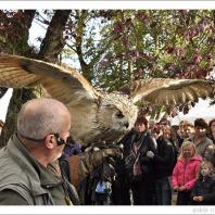 Roofvogelshow op woensdag