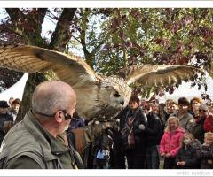 Gratis roofvogelshow in Volkspark Rijssen