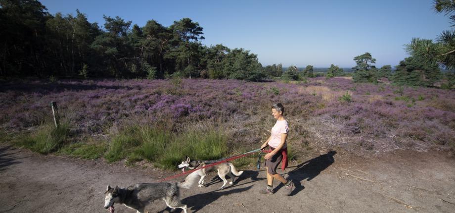 Met de hond op stap