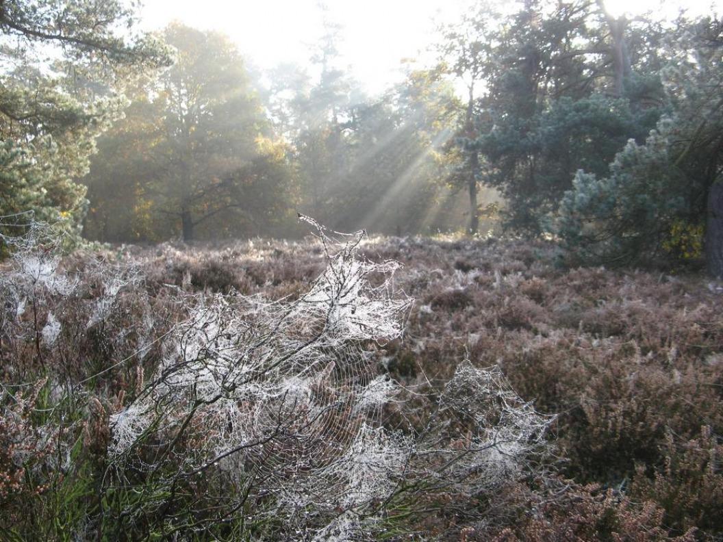 Het Hulsbeek: Spinnen