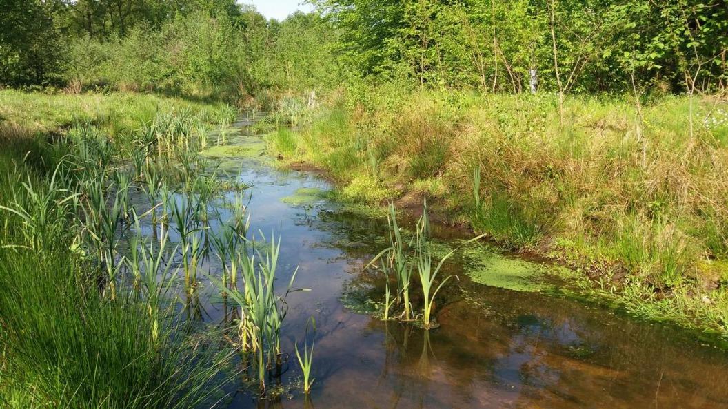 Het Hulsbeek: Meanderen