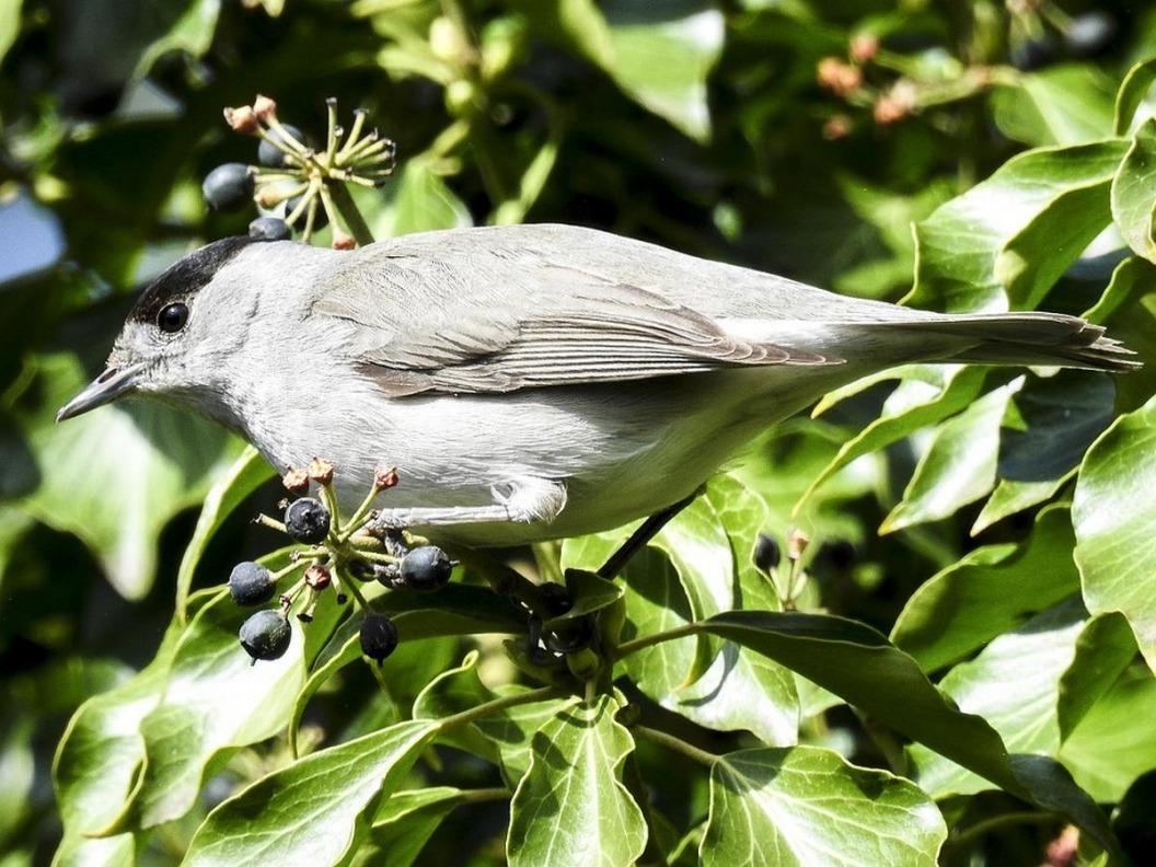 Het Hulsbeek: Vogelgeluiden
