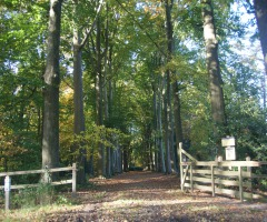 (rolstoel)wandeling Grintenbosch