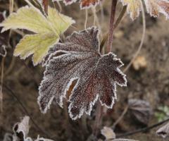 Winterwandelingen De Lutte GEANNULEERD