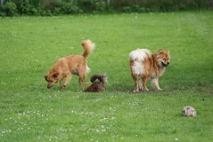 Hondenpension De Weiteman