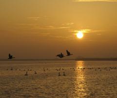 Vaar met zonsondergang mee naar Vogeleiland