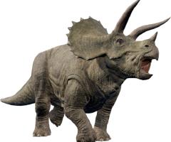 Expeditie Triceratops