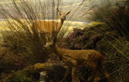 Met de boswachter door het museum