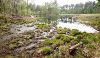 Nature reserve Roderveld