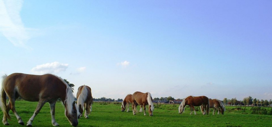 Proef paardenmelk