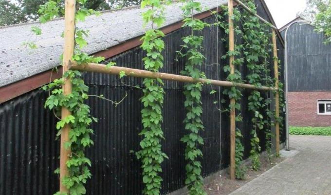 Berghoeve Brouwerij: al tien jaar lokaal sterk met brouwerij in boerderij