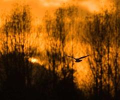 Varen door de Weerribben bij zonsondergang