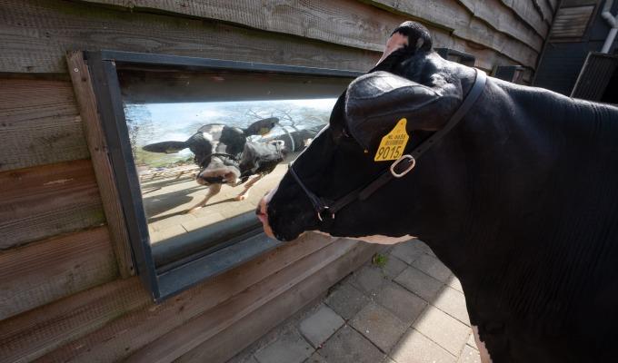 De laatste week in Twente voor cowfluencer Liesje22. Wat vonden jullie ervan?