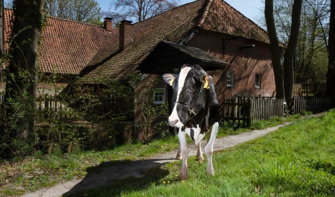 Week 2 bracht cowfluencer Liesje22 op de mooiste zonnige plekken.