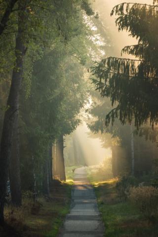 Ontdek de flora en fauna van de Sallandse Heuvelrug met deze 5 tips