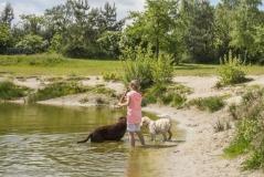 Wandelen met je trouwe viervoeter bij Landal Twenhaarsveld