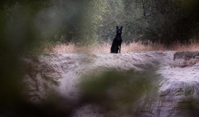 De Hellehond: waarom de zwarte hond zorgt voor angst in De Lutte.