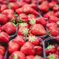 De lekkerste aardbeien uit Manderveen