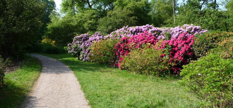 Arboretum in het voorjaar