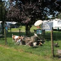 Boerderijdieren - camping de Stuwe