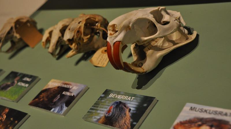 Expositie schedels en botten