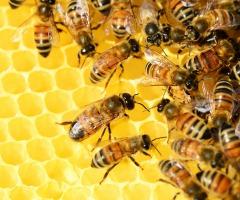 Open dag Bijenstal in Vriezenveen