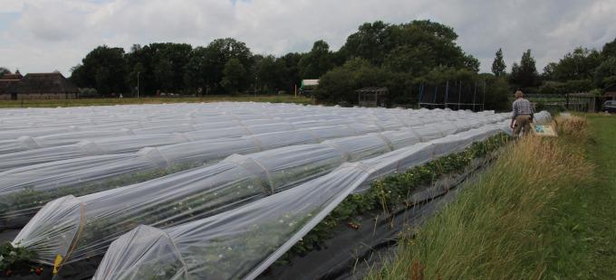 RozemArrie aardbeienboerderij