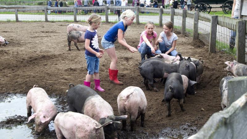 Biggen knuffelen en rondleiding op innovatief varkensbedrijf