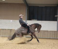 Open Dag: Roemer Quarter Horses