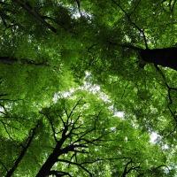 Zie door de bomen het bos weer