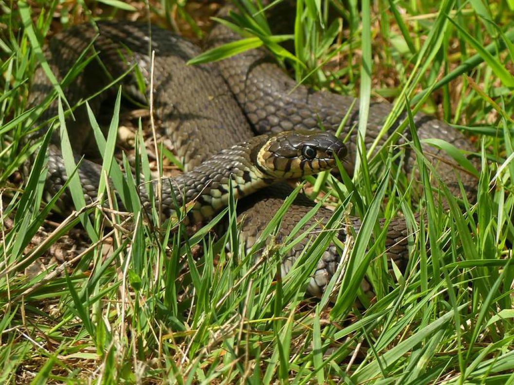 Niet schrikken, een slang!