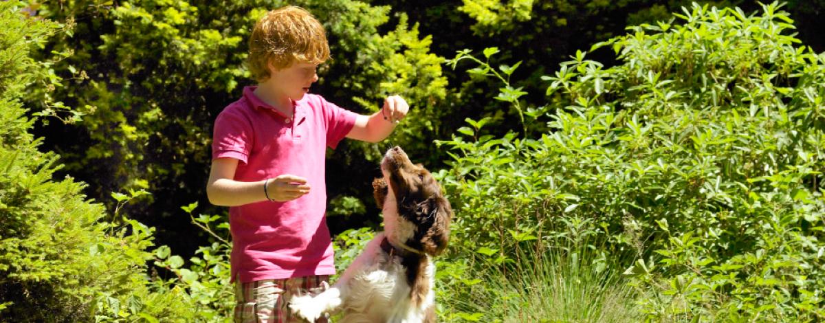 Wandelen met de hond op de Sallandse Heuvelrug