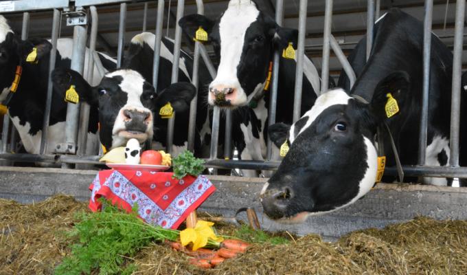 Rondleiding en lunch bij de koeien