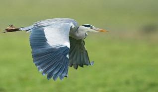 Vogelkijkhut Lageweg