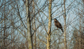 Vogelkijkhut Lokkenpolder