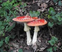 Paddenstoelen ontdekken in het Arboretum